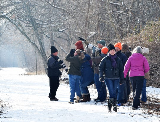Members of the Delmarva Ornithological Society spot a saw-whet owl in a tree along a trail at the John Heinz National Wildlife Refuge at Tinicum near the Philadelphia International Airport during the 2019 owl walk hosted by the group.