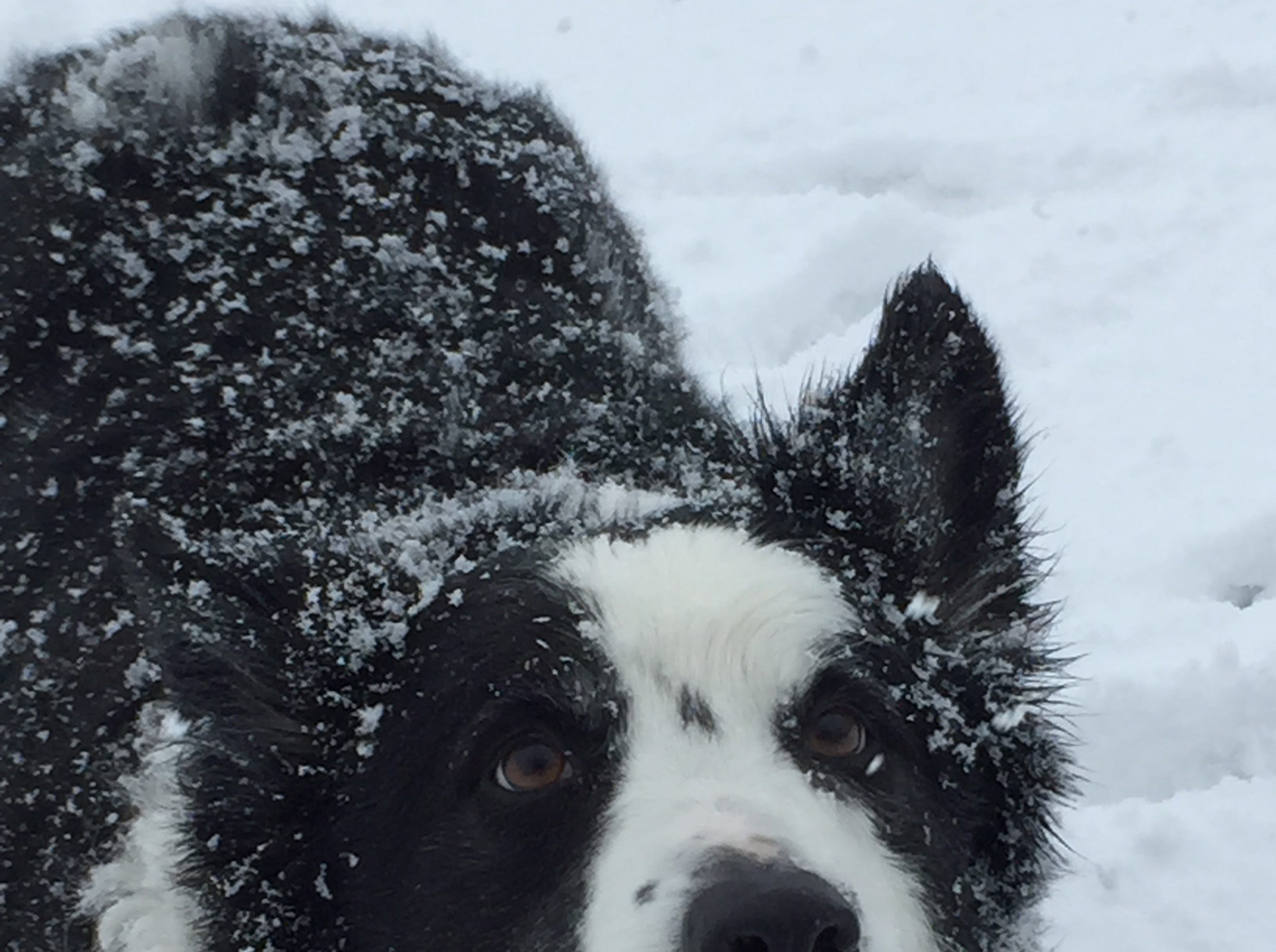 Cold temperatures, snow and sleet can't dampen the enthusiasm for winter of editor Colleen Kottke's border collie, Jack.