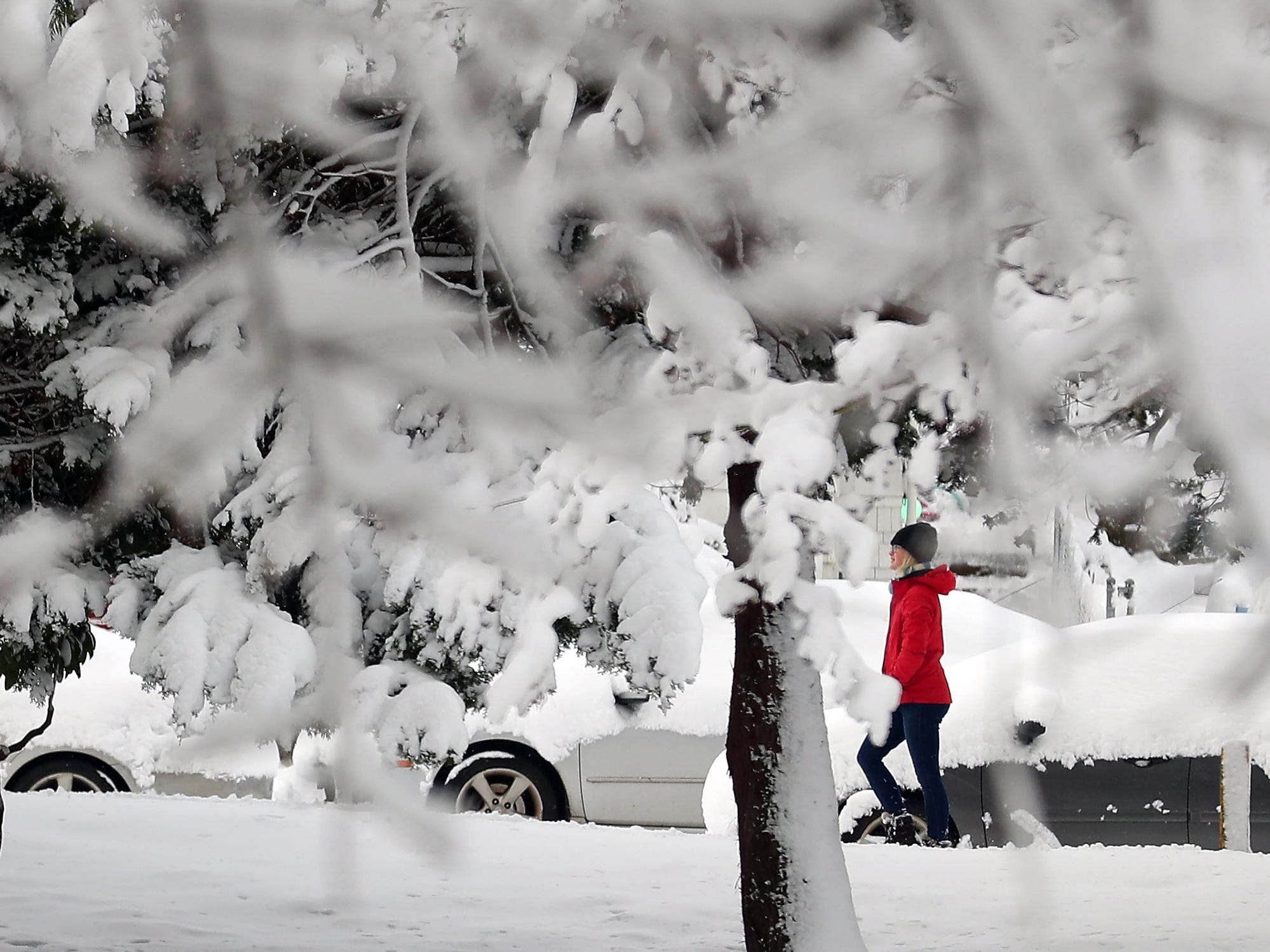 Joelle Dempster is framed by snowy branches as she wanders along Park Ave. in Bremerton on Saturday, February 9, 2019.
