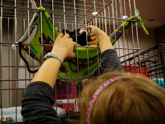 Meghan Sheein-Day reaches to play Cerah, a kitten at the My Furry Valentine adoption event, Saturday, Feb. 9, 2019.