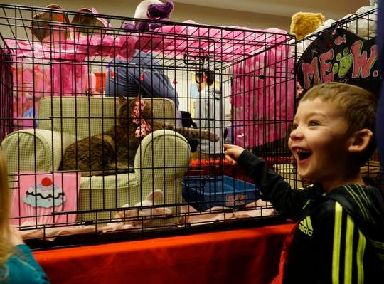 Easton Porter laughs at a lounging cat at the My Furry Valentine adoption event, Saturday, Feb. 9, 2019.