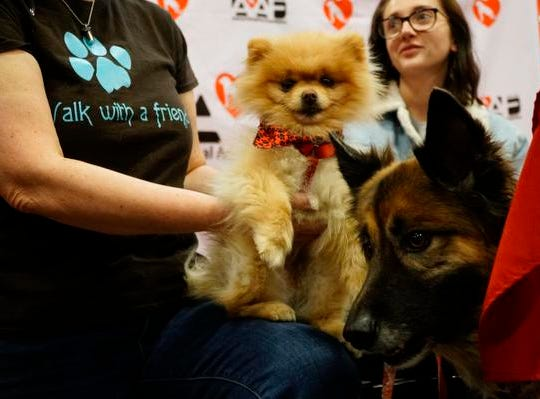 Romeo, a Pomeranian, and Mary Jane, a german shepherd, under the care of the Animal Adoption Foundation at the My Furry Valentine adoption event, Saturday, Feb. 9, 2019.