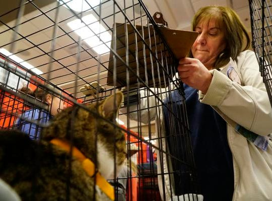 "Jackie Snell signs paperwork on the cage of her new cat, ""Mike,"" to adopt him from the Animal Friends Humane Society at the My Furry Valentine adoption event, Saturday, Feb. 9, 2019."