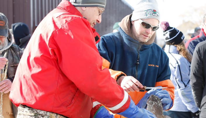 The final numbers are in for sturgeon spearing season. Here are some fast fish facts