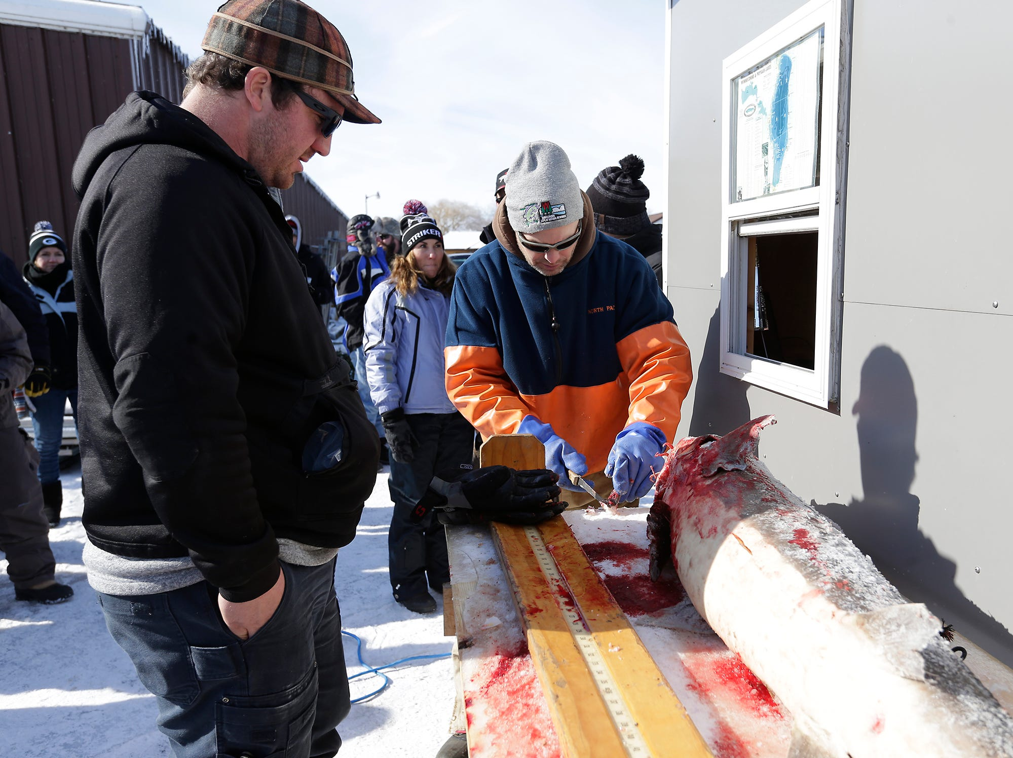 Wisconsin DNR representative Scott Bunde (right) works on a 68 pound sturgeon speared by Josh Cauley (left) of Kaukauna Saturday, February 9, 2019 at Wendt's on the Lake between Fond du Lac and Oshkosh. Sturgeon spearing season runs from February 9, 2019 through February 24, 2019 on Lake Winnebago or until any