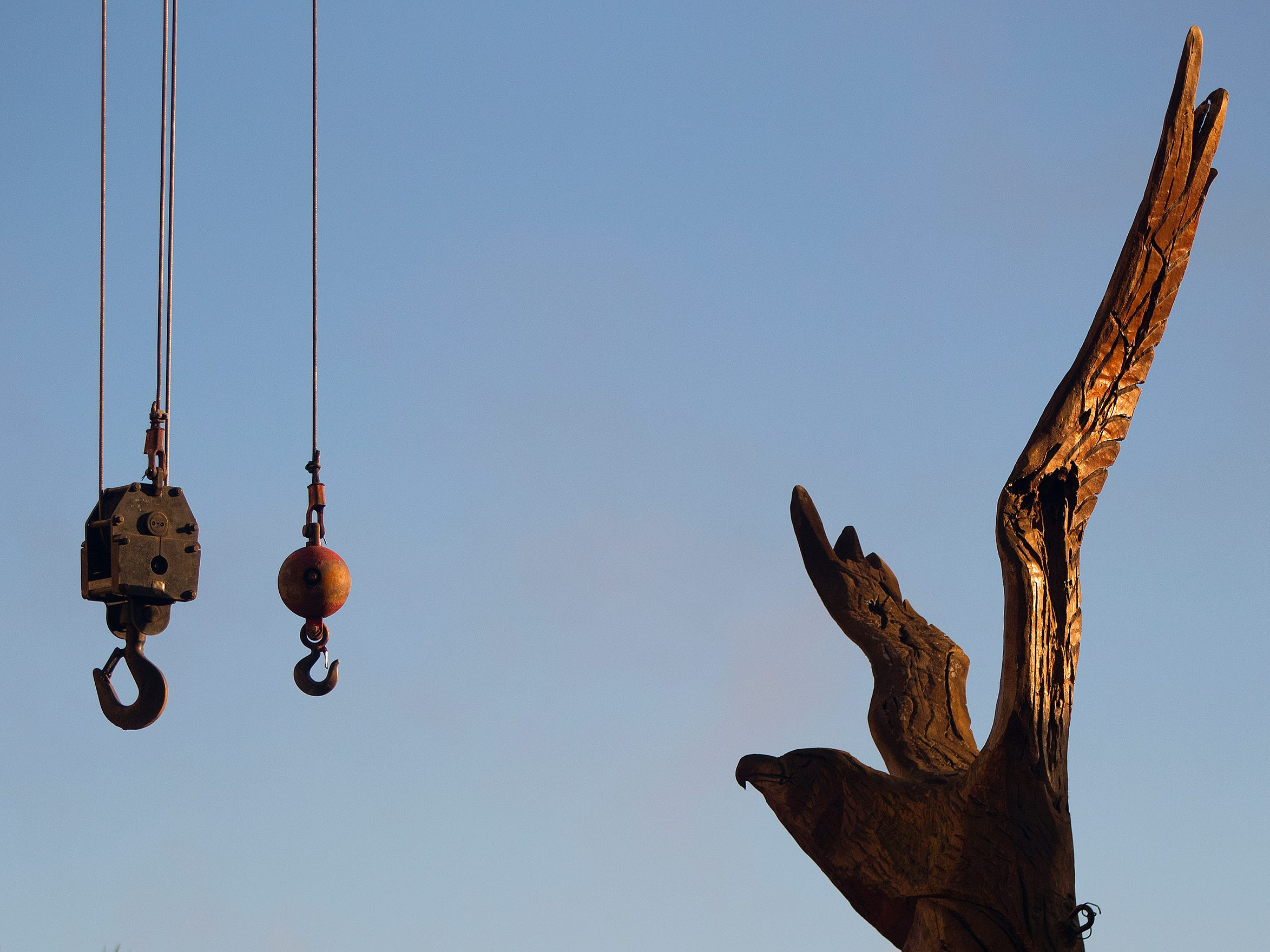 The Lee County Eagle Tree located in front of the Old Lee County Courthouse on Main Street in downtown Fort Myers was removed on Saturday. Lee County's Department of Facilities, Construction & Management is renovating the Eagle Tree to preserve and protect it from environmental impacts. The renovations will be completed off site at a Lee County facility. Project completion is expected within about six months. The tree, which dates back to around 1900, has been a sculpture since 2011.