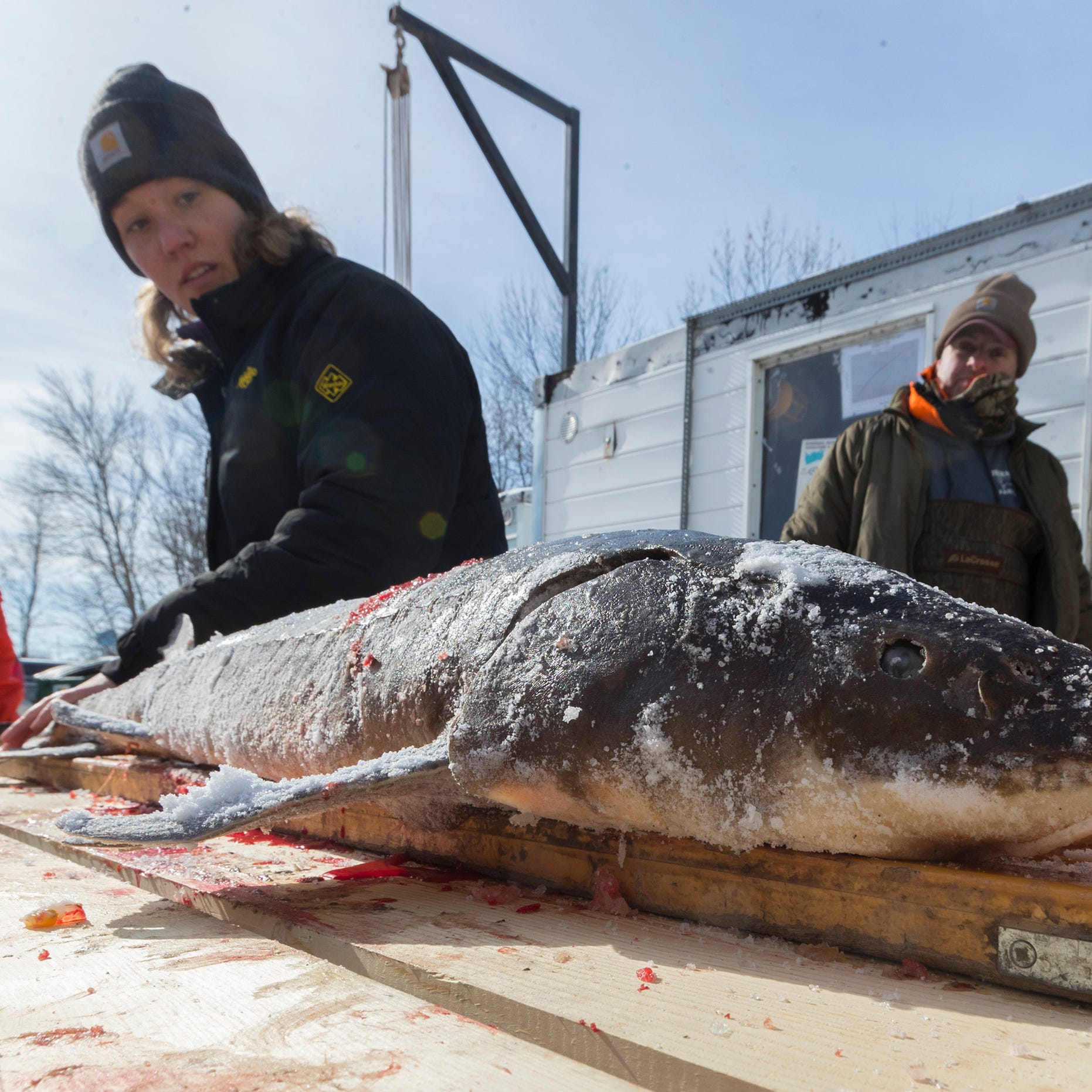 Manitowoc outdoors: Spring hearings include questions on sturgeon spearing, CWD