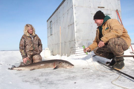 Michelle Muche of Van Dyne, Wisconsin kneels next to the sturgeon she speared on opening day of the 2019 Winnebago System sturgeon season as her husband, Paul Muche, reconfigures the spear.