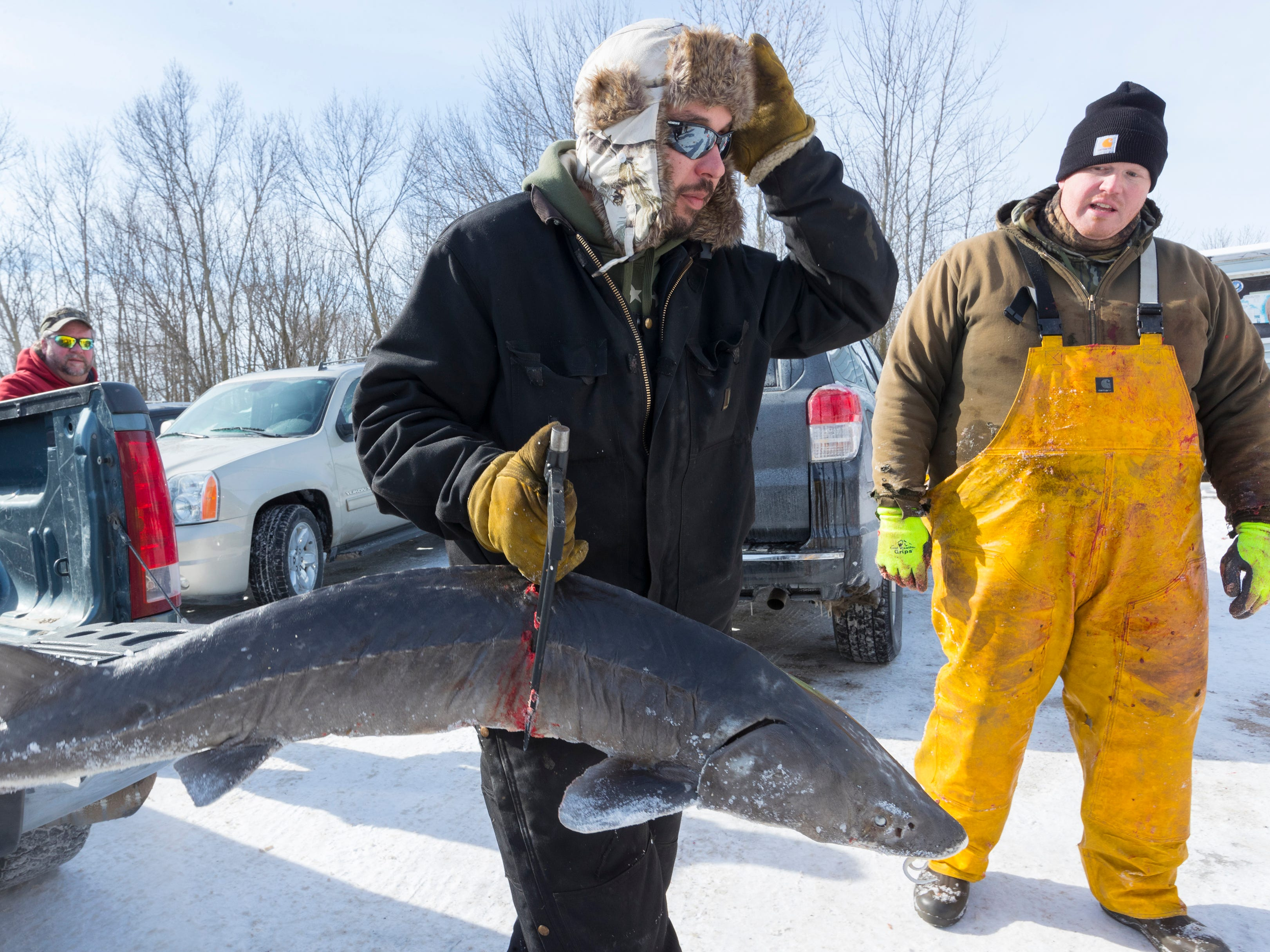 Beau Doemel carries his sturgeon to be registered during the opening day of sturgeon spearing Saturday at Critter's in Winneconne, Wis.