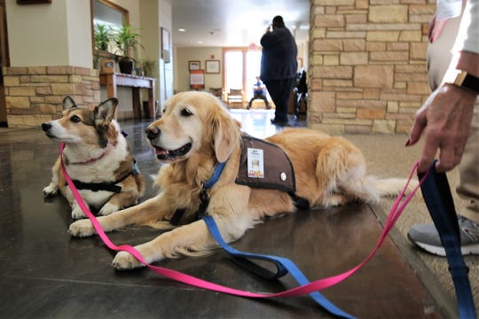 Rosie, left and Sophie, right, rest Friday in the lobby of San Juan Regional Medical Center.