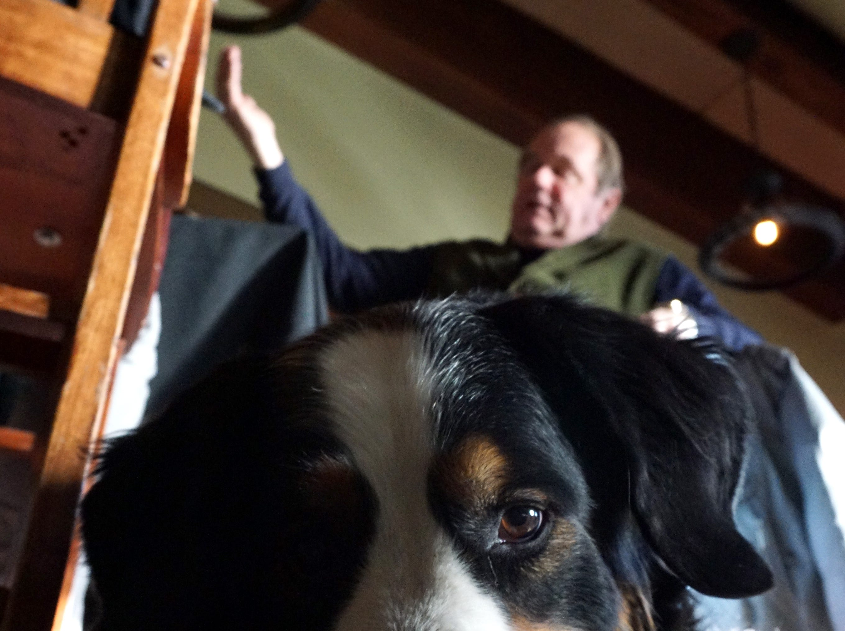 Stella's Trackside in Plymouth's owner Bob Ostendorf talks about changes to the Starkweather restaurant as its namesake Bernese Mountain dog hangs out near his feet.