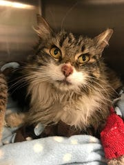 Bella the cat was found in Banning after surviving two months on her own. Her owners from Santa Barbara picked her up on Friday.