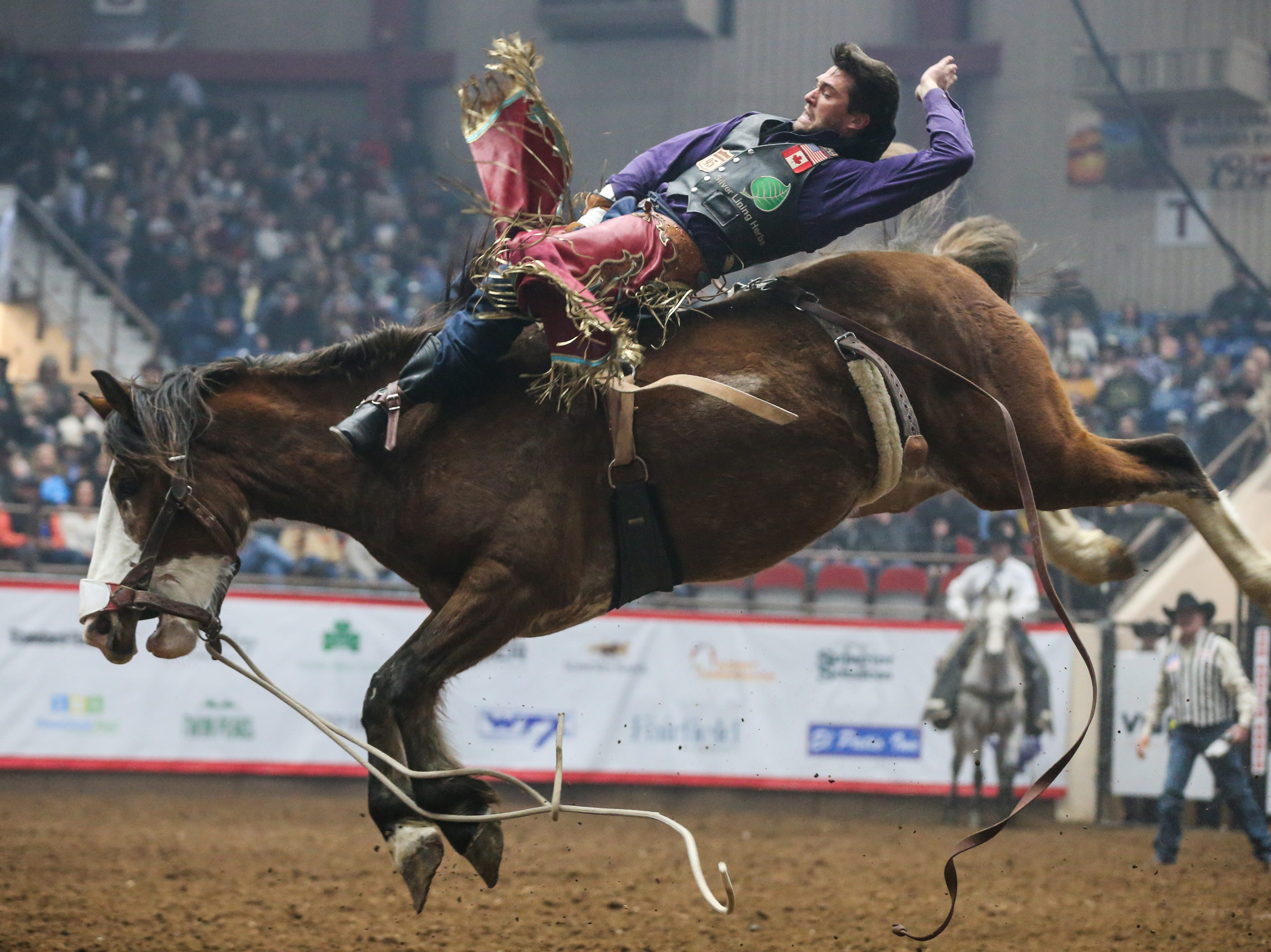Caleb Bennett rides bareback during the 5th performance of the San Angelo Stock Show & Rodeo Friday, Feb. 8, 2019, at Foster Communications Coliseum. He scored 85.5 on his ride.