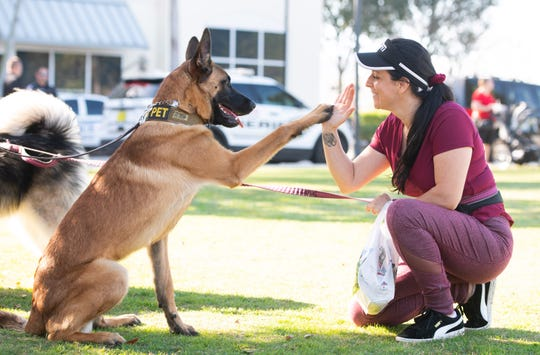"""Elizabeth Hunt, of Port St. Lucie, gets a high five from her 8-month-old Belgium Malinois named """"Masumi"""" during the Humane Society of St. Lucie County's fifth annual Paws in the Park event at Tradition Square on Saturday, Feb. 9, 2019, in Port St. Lucie. """"This is really a great experience,"""" Hunt said about the event."""