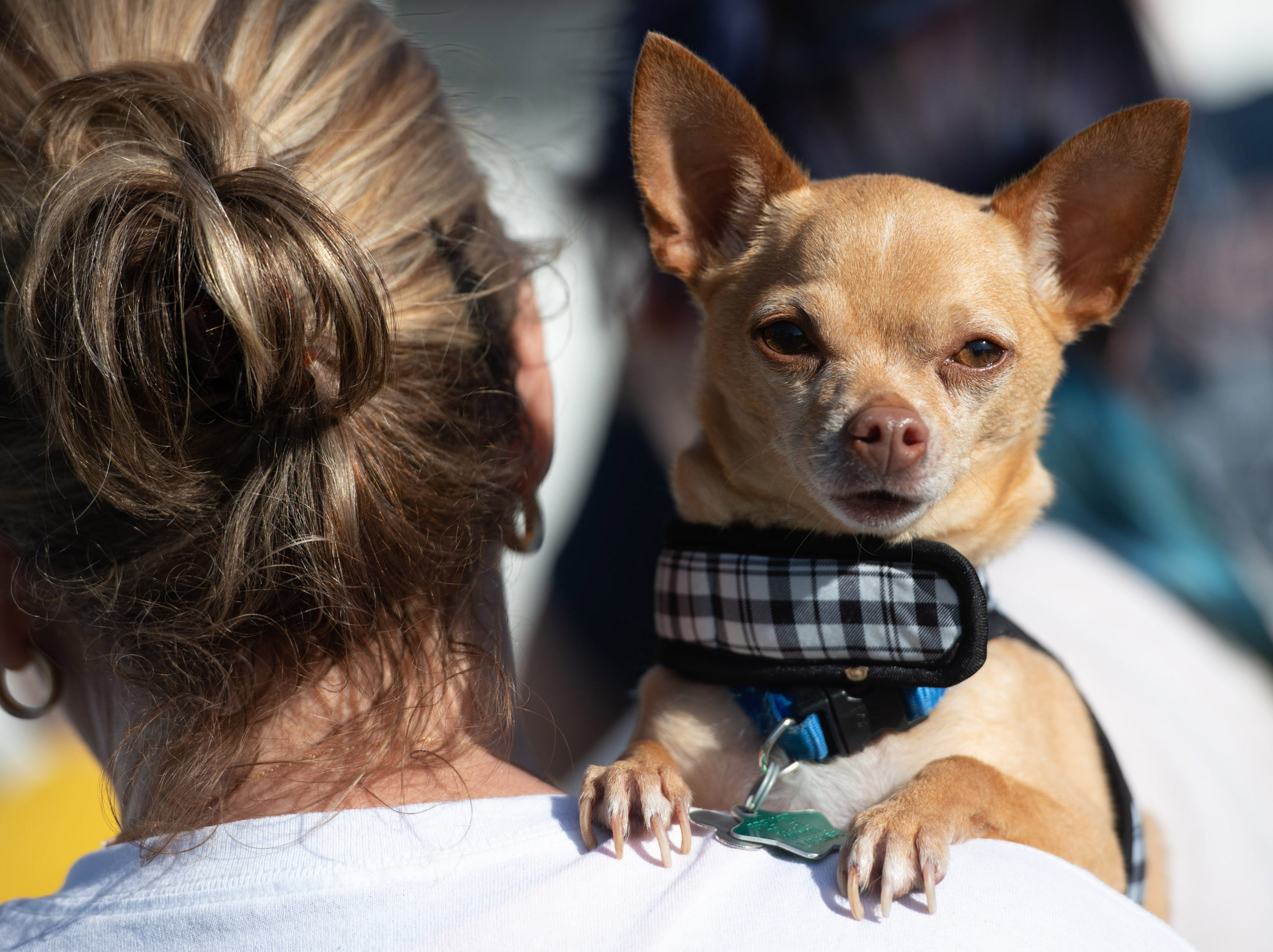 People and four-legged companions attend the Humane Society of St. Lucie County's fifth annual Paws in the Park at Tradition Square on Saturday, Feb. 9, 2019, in Port St. Lucie.