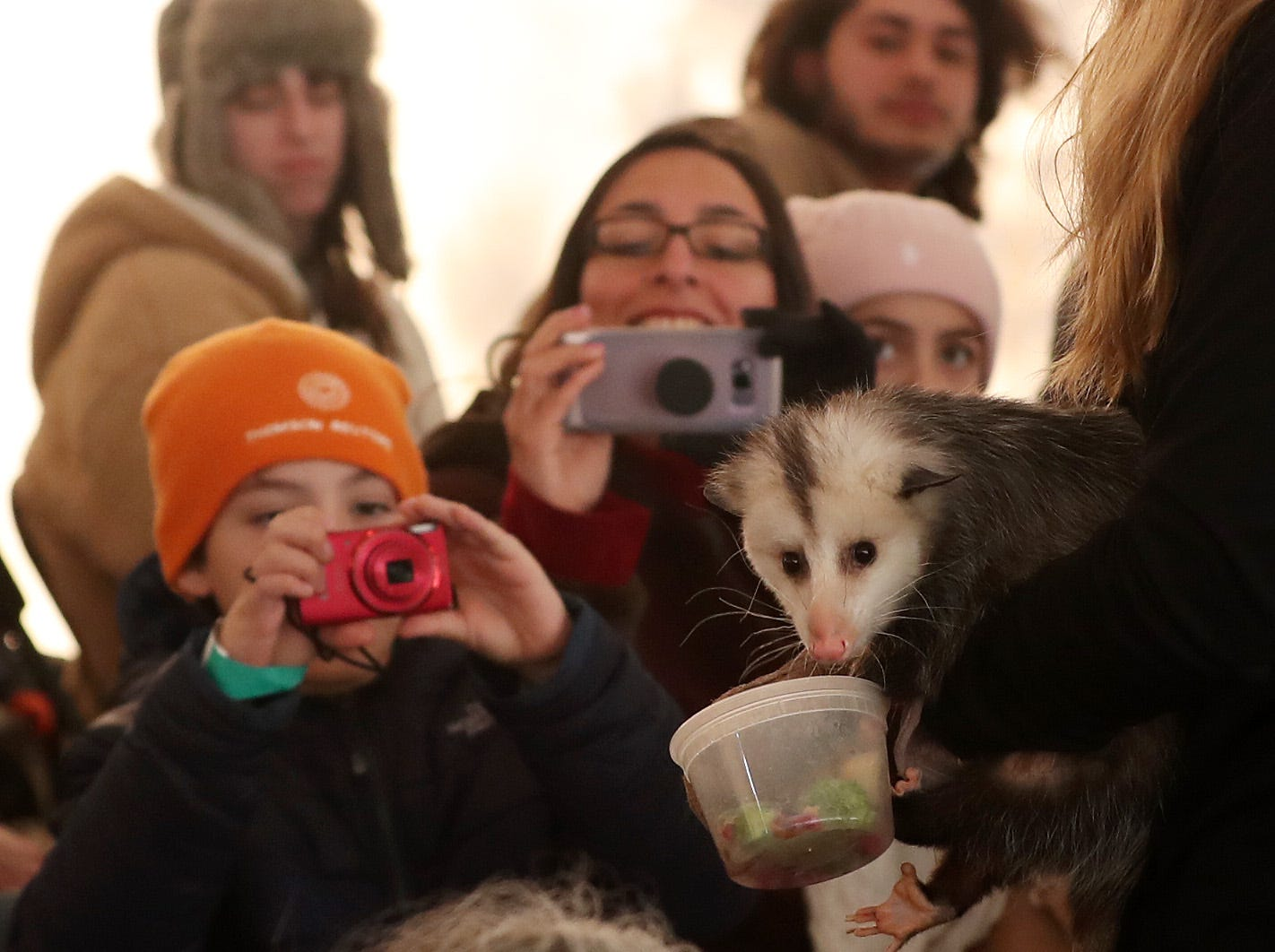 People take photos of an opossum that is being held by Maddie Schroeder of Teatown Reservation, during the annual Hudson River Eaglefest at Croton Point Park Feb. 9,  2019.