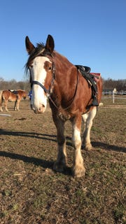 Bubba, a Delaware City Clydesdale, died Wednesday after two rescues by firefighters.