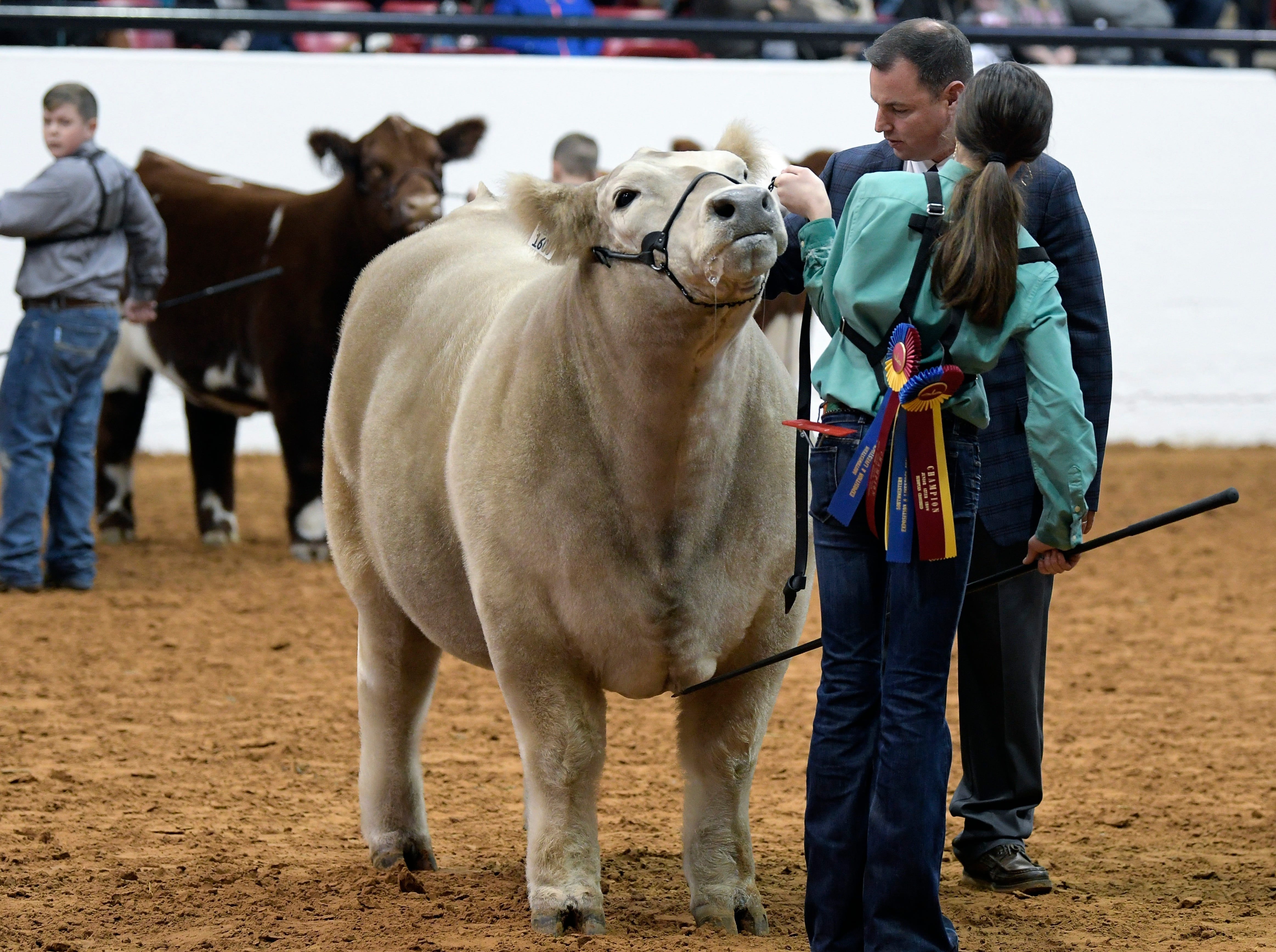 Aven Horn,front right, shows her steer Bentley to Judge Chris Mullinix during the Grand Champion steer round of the Stock Show at Will Rogers Memorial Center in Fort Worth, Texas, Friday, Feb. 8, 2019. Bentley was named Grand Champion steer.