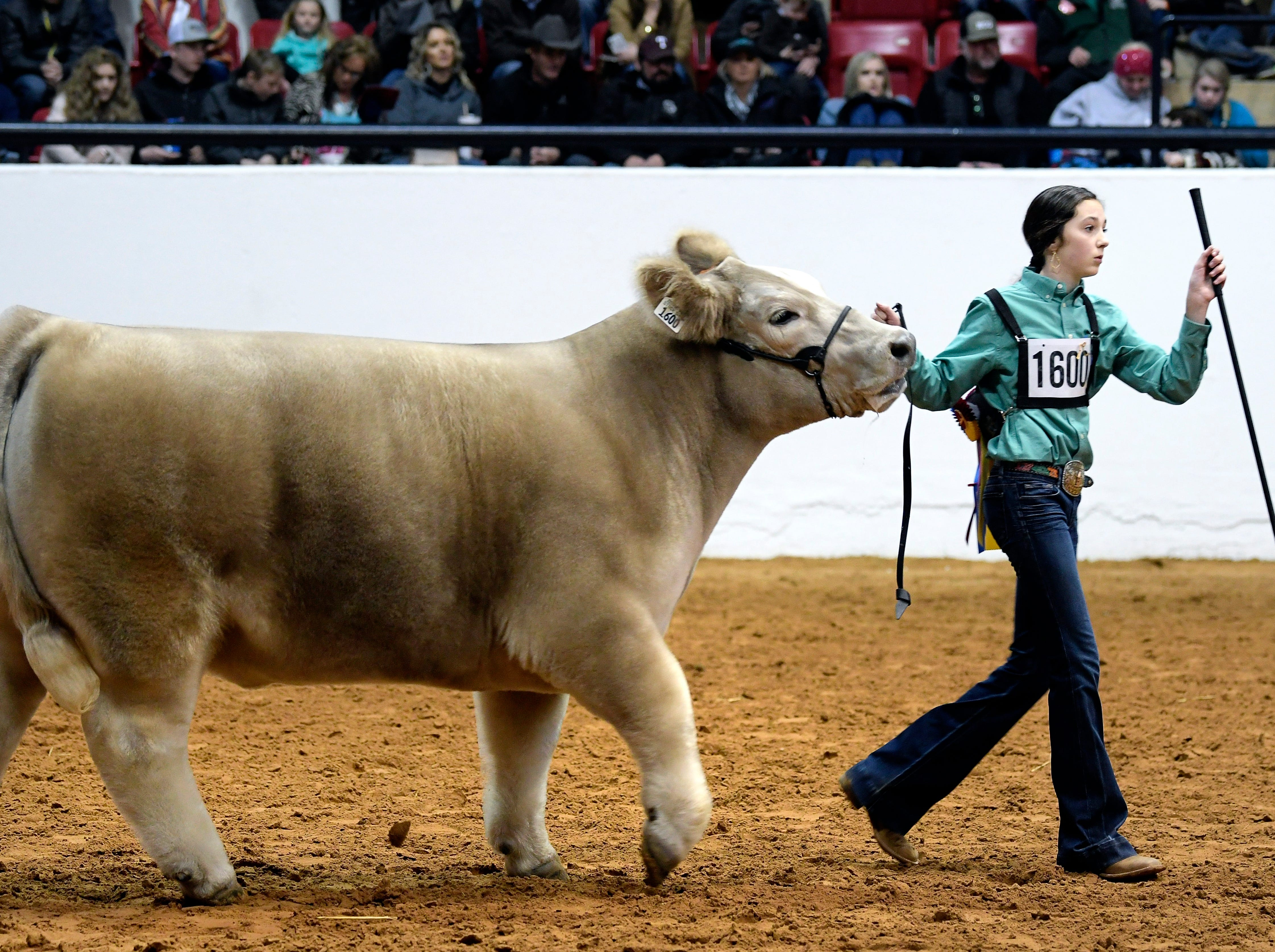 Aven Horn shows her steer Bentley during the Grand Champion steer round of the Stock Show at Will Rogers Memorial Center in Fort Worth, Texas, Friday, Feb. 8, 2019. Bentley was named Grand Champion steer.