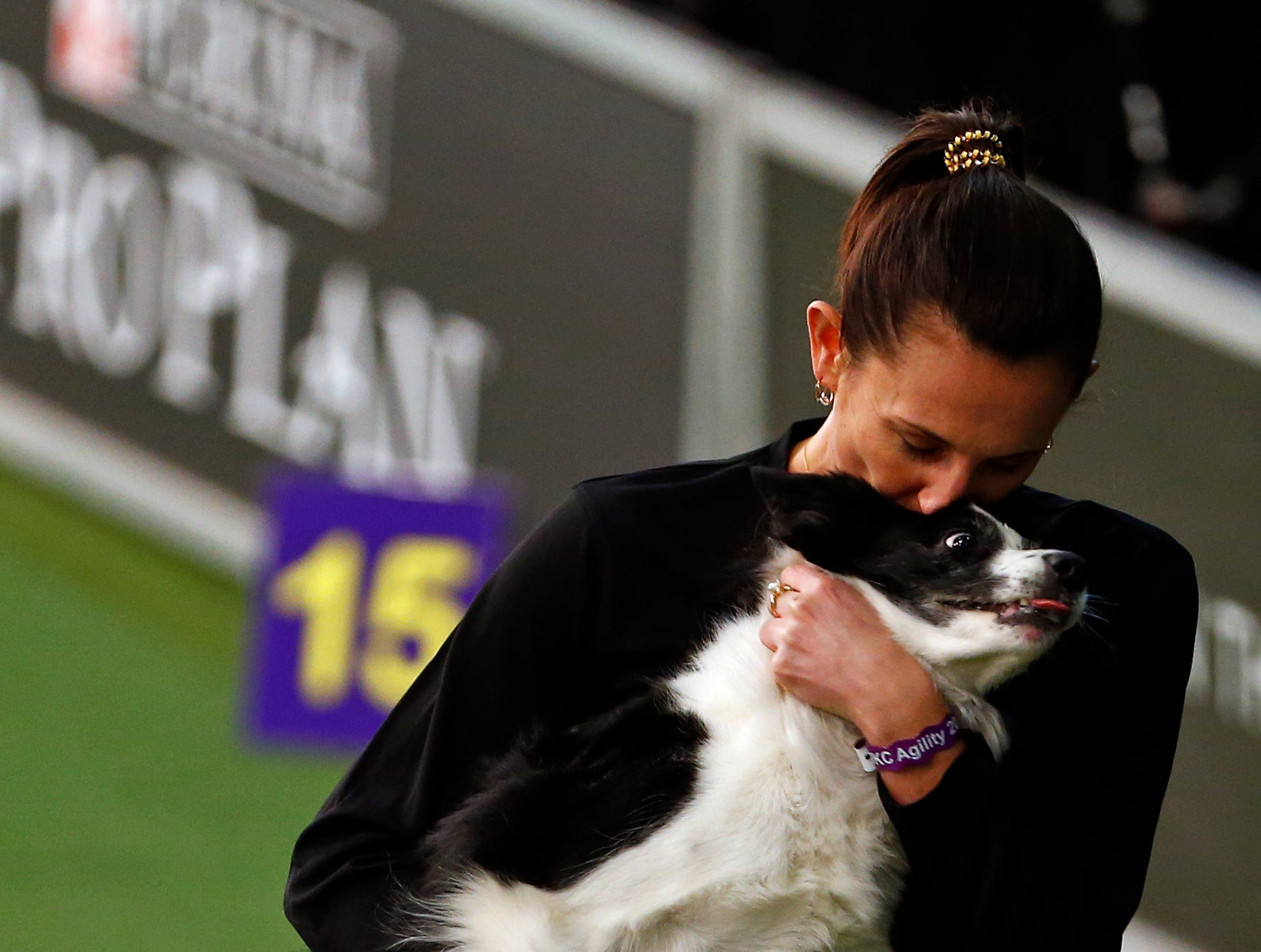 Fame, a Border Collie, is seen during masters agility preliminaries.