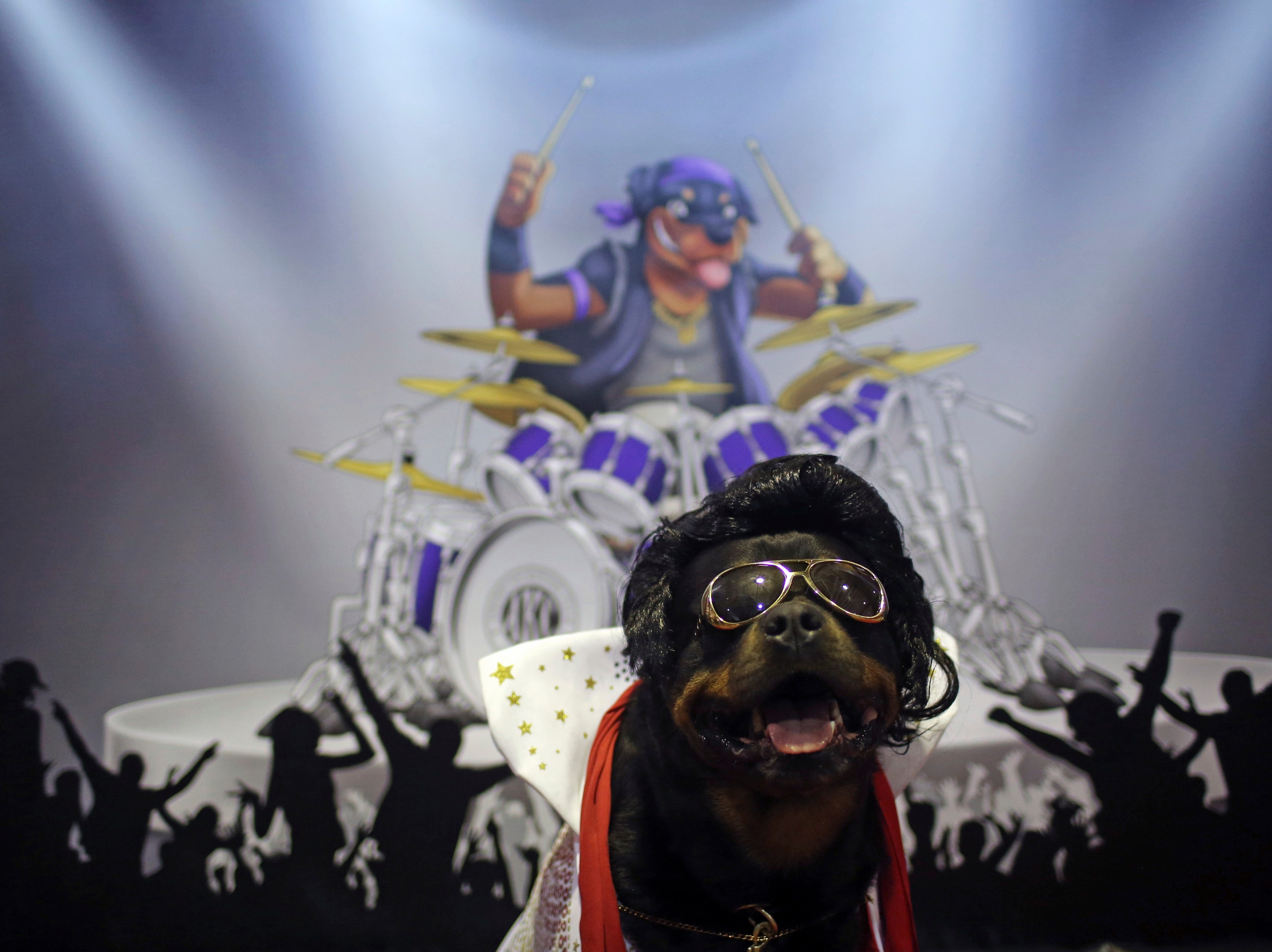 Talos the Rottweiler dressed to look like Elvis Presley waits for people to pose next to him during the meet the breeds companion event to the Westminster Kennel Club Dog Show, Saturday, Feb. 9, 2019, in New York.