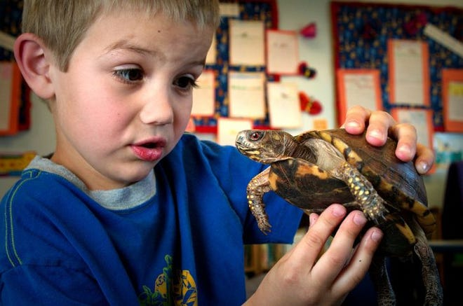 See turtles up close, and view the amazing National Geographic Photo Ark, on Saturday at Preston Arts Center.