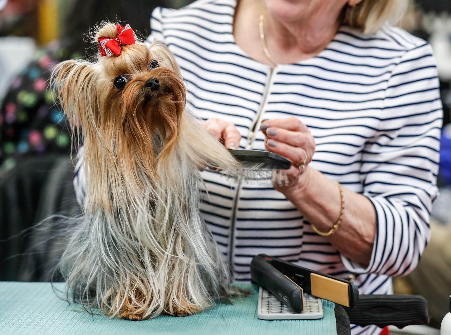Pam Wengorovius, center, grooms her dog Freya, a Yorkshire terrier, during the Indy Winter Classic All Breed Dog Show held at the Indiana State Fairgrounds on Sunday, Feb. 10, 2019.
