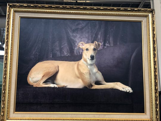 A dog strikes a pose in a portrait by David Beisinger