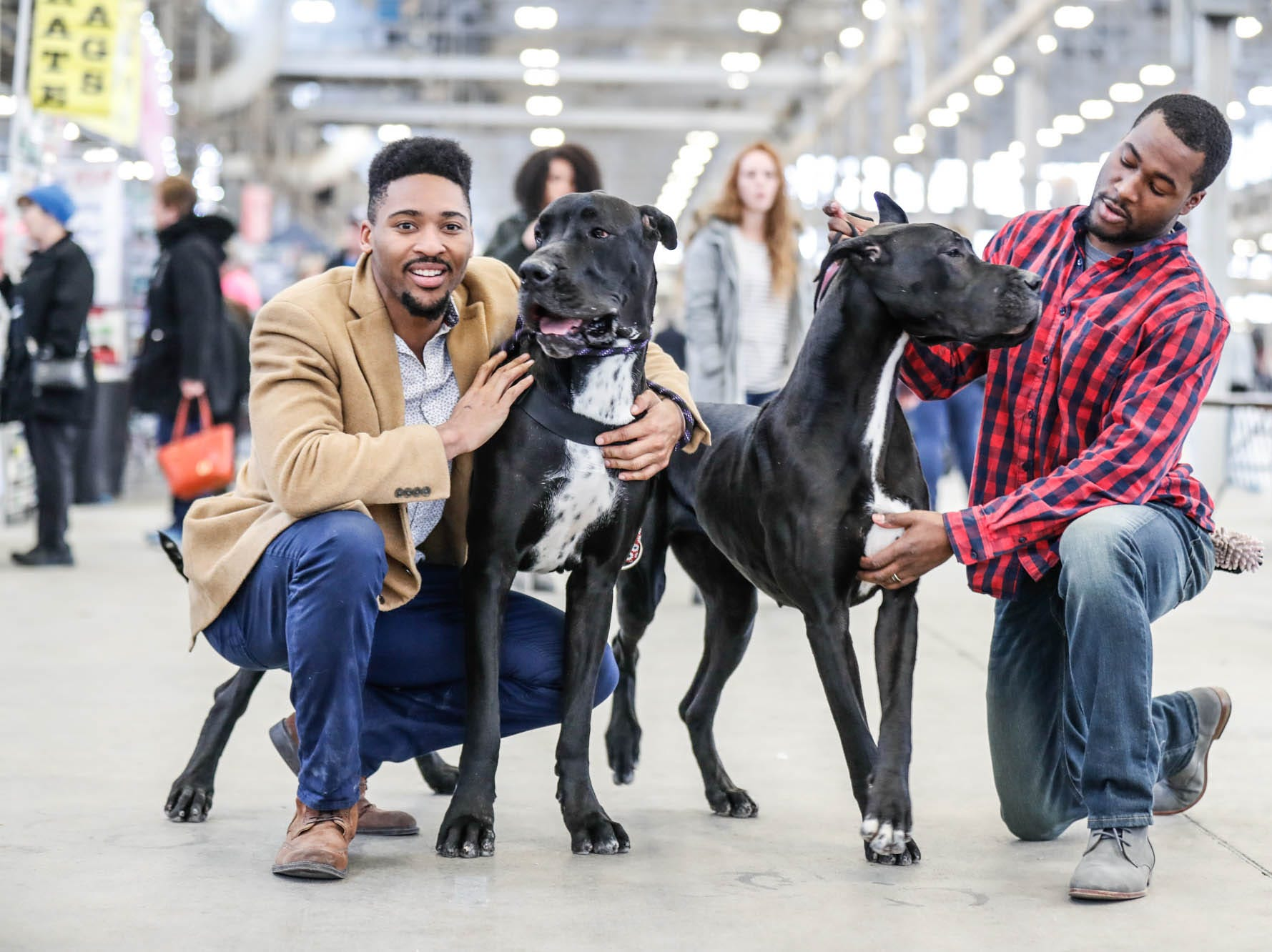 Cameron Hollins, left, and Rich White, of Divine Danes, pose for a photo with their Great Danes, Fia, left, and award winner Poppy, during the Indy Winter Classic All Breed Dog Show, held at the Indiana State Fairgrounds on Sunday, Feb. 10, 2019.
