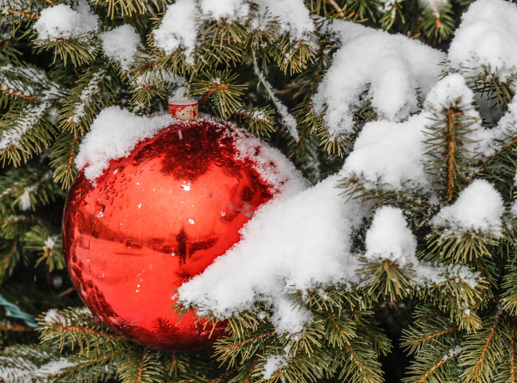 Snow coats Christmas decorations on a pine tree along Illinois St. in Indianapolis on Sunday, Feb. 10, 2019.