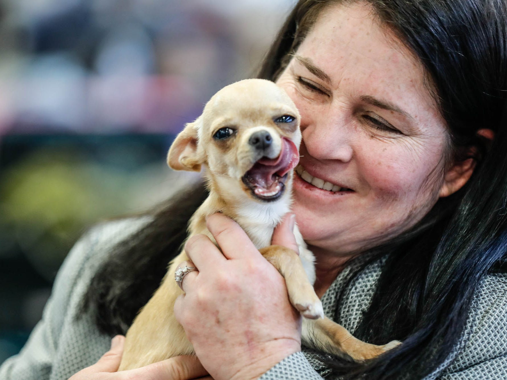 Eva, a Chihuahua puppy, is held by handler Debbie Coggin during the Indy Winter Classic All Breed Dog Show held at the Indiana State Fairgrounds on Sunday, Feb. 10, 2019.