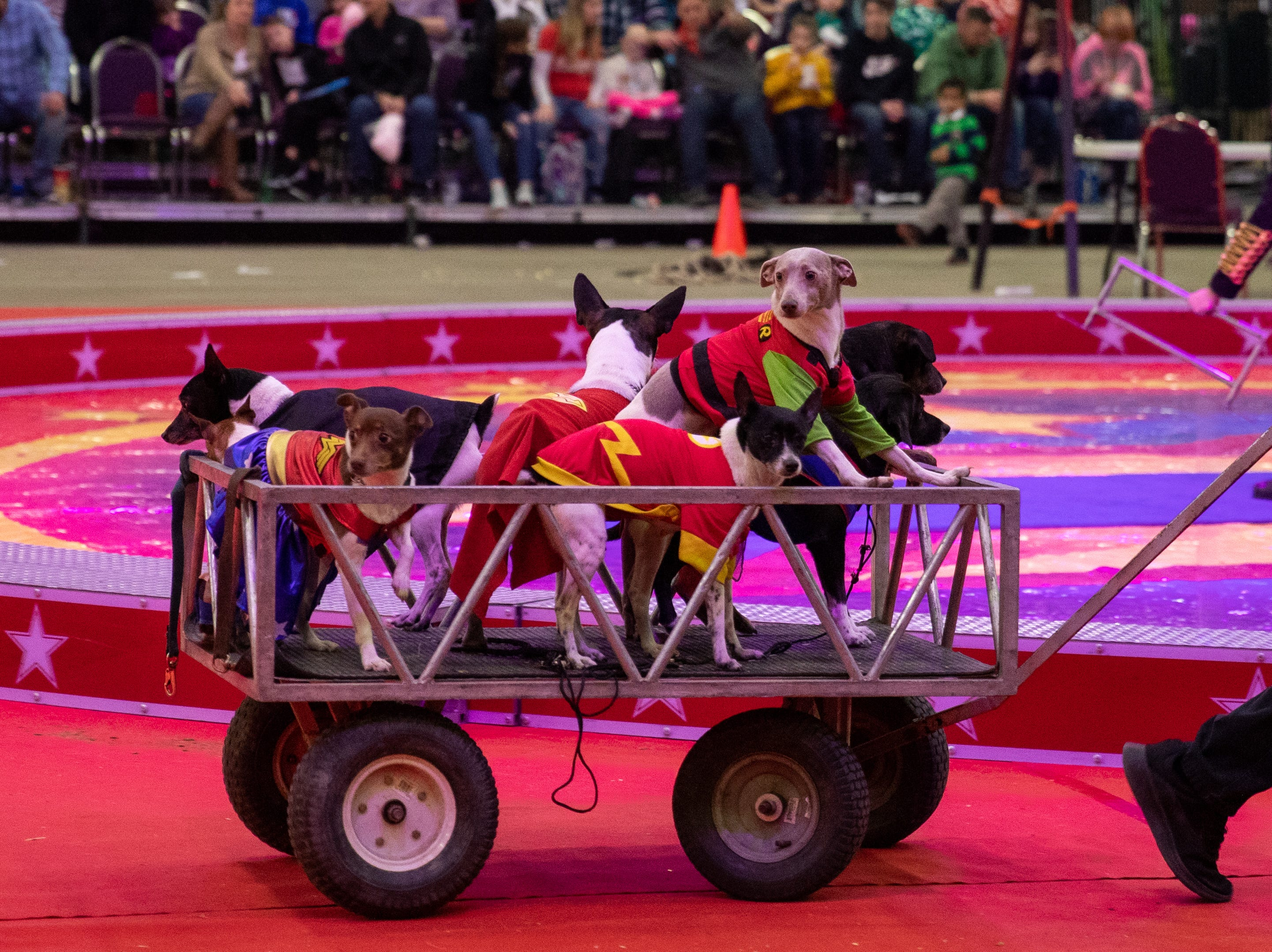 A wagon full of cape-clad pups travels to the circus ring to begin the second half of the Kosair Shrine Circus, Saturday, Feb. 9, 2019 in Louisville Ky.
