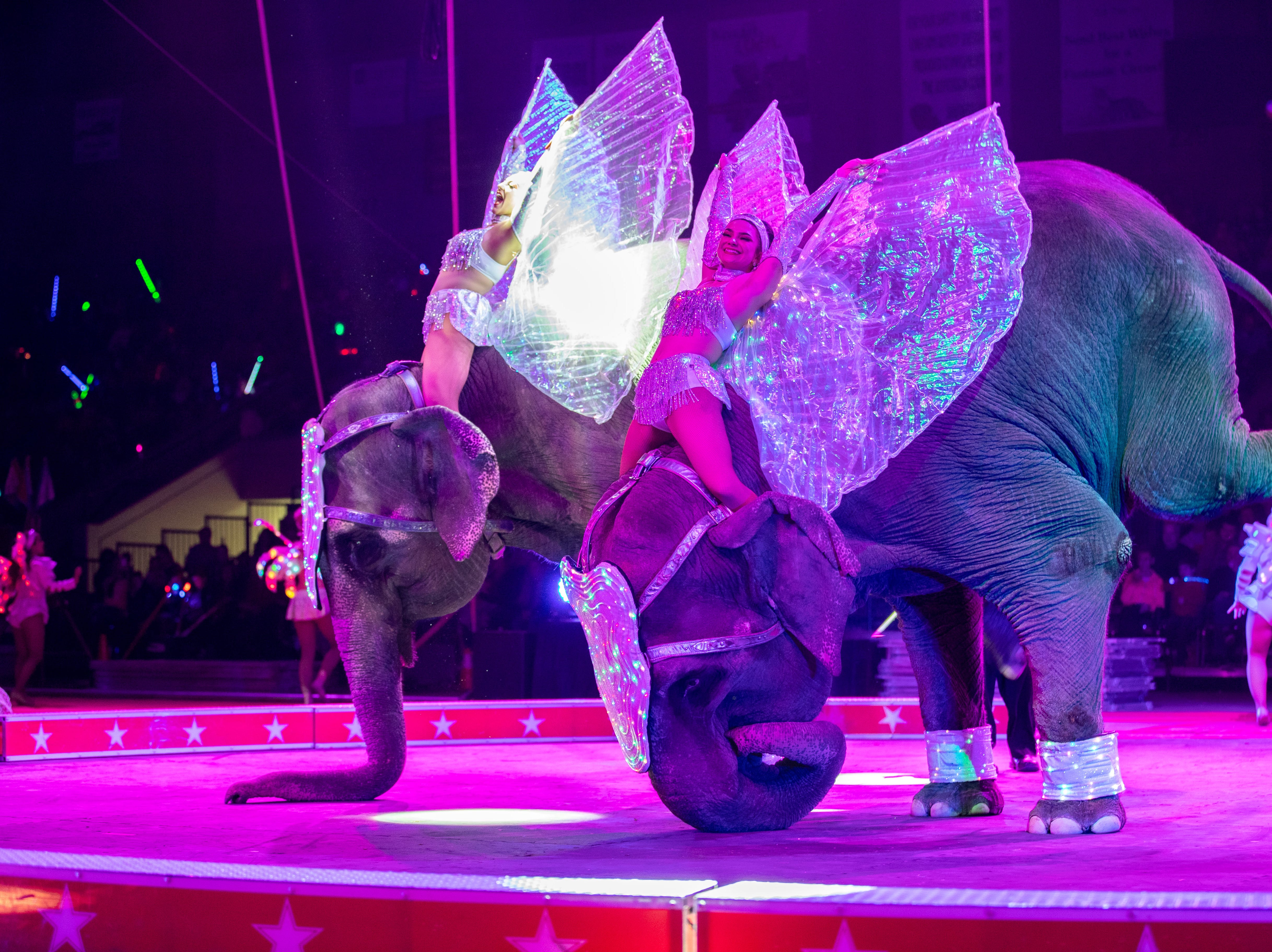 Two enormous elephants use their trunks for balance as they kick their hind legs off the ground, Saturday, Feb. 9, 2019 in Louisville Ky.