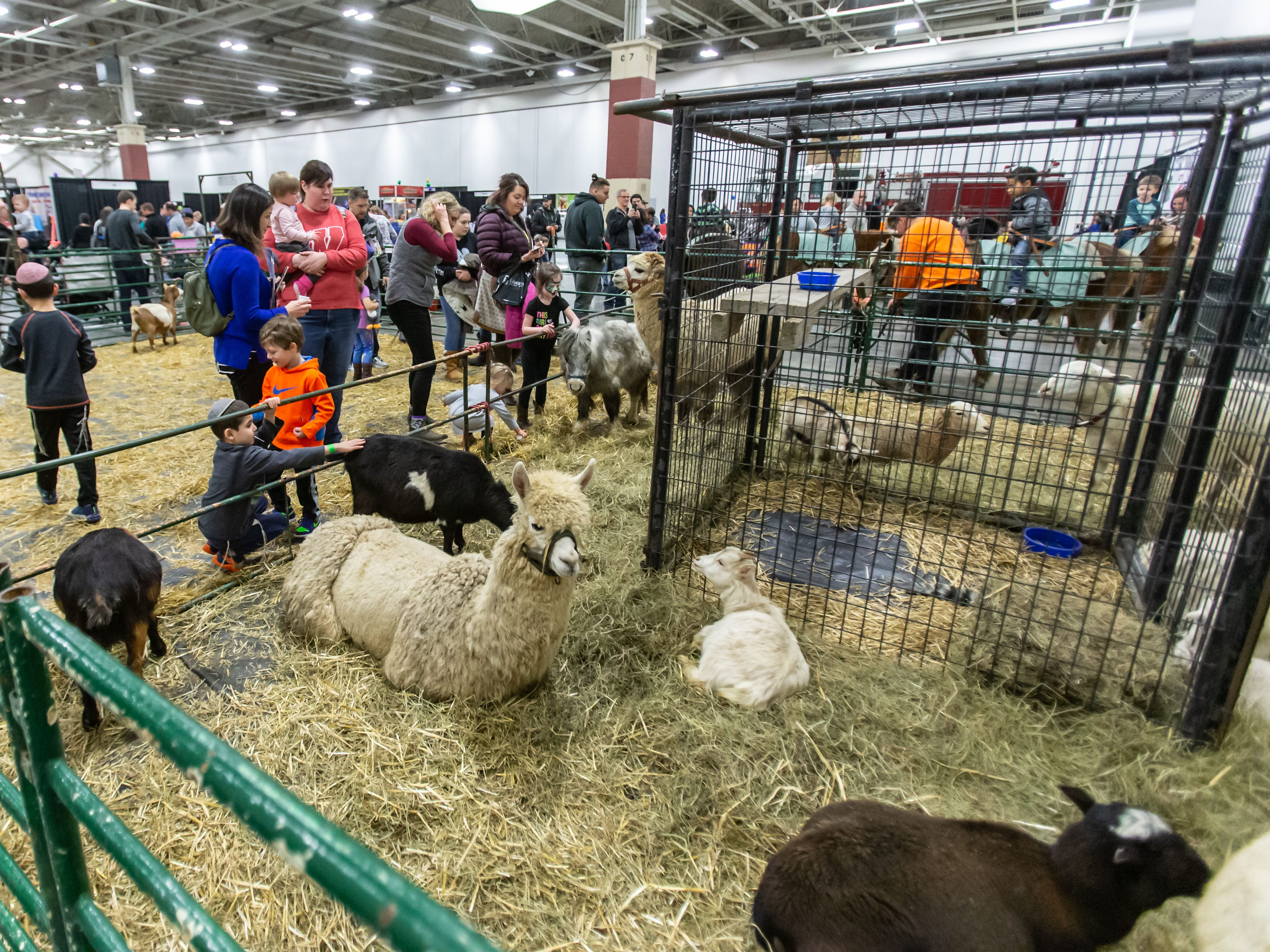 Visitors are greeted by a variety of animals at Jo Don Farms Petting Zoo during the Milwaukee Kids Expo at State Fair Park in West Allis on Sunday, Feb. 10, 2019. The two-day expo featured bounce houses, a petting zoo, a rock climbing wall, pony rides, caricature paintings, a maze challenge and much more.