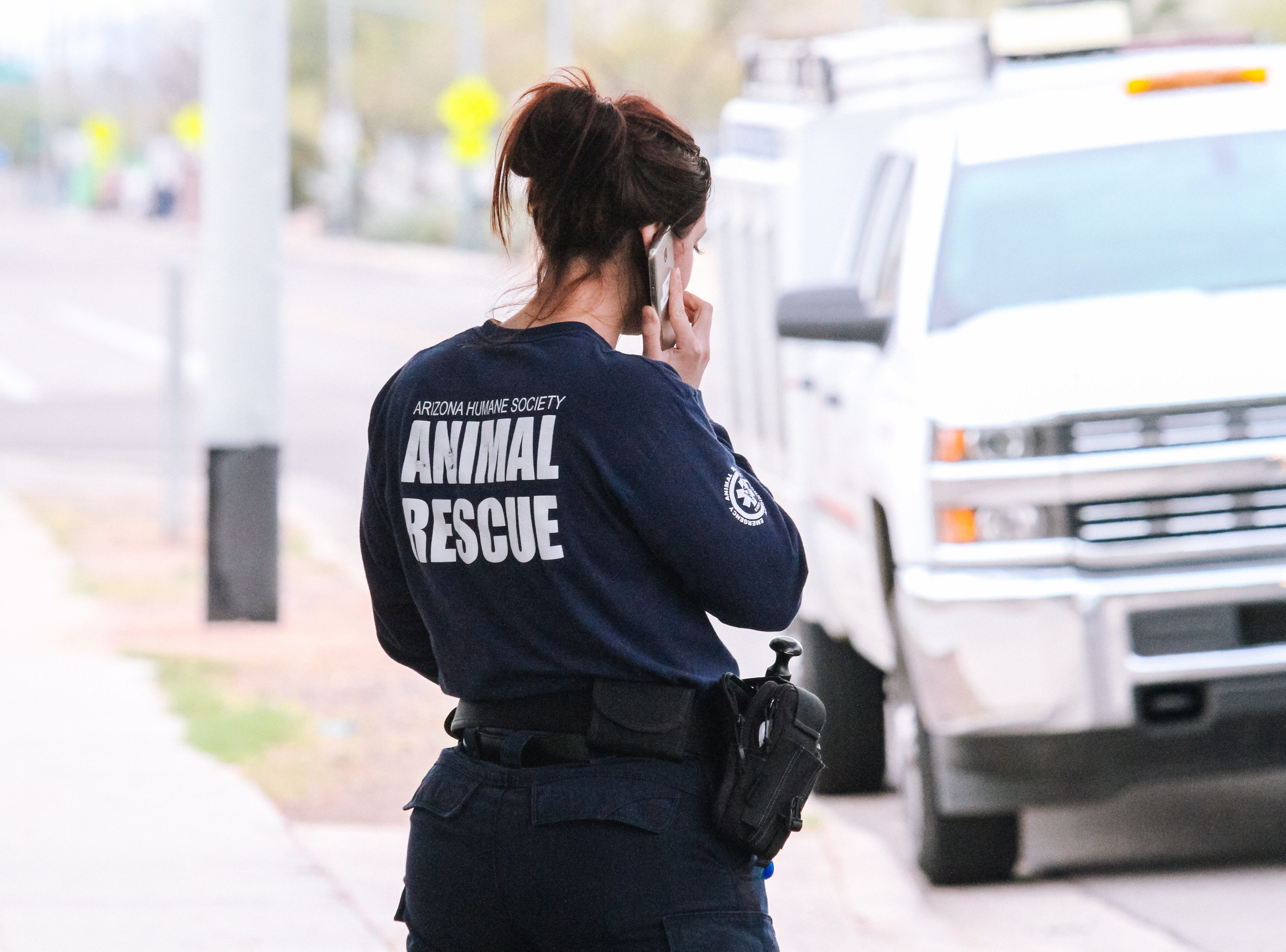 Police and the Arizona Humane Society were called to a Phoenix home after receiving reports of a dead cat hanging from a tree on Feb. 9, 2019.