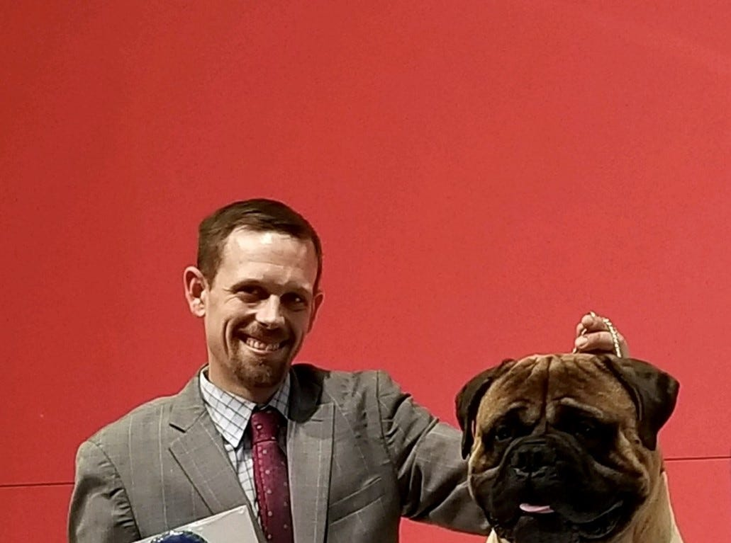Gus, a bullmastiff owned by Lisa and JP McCormick of Frankford, will compete in the Westminster Kennel Club Dog Show in New York for the third time. Gus was a Best in Specialty Show winner at the AKC National Championship in Orlando, Fla., in December 2018.