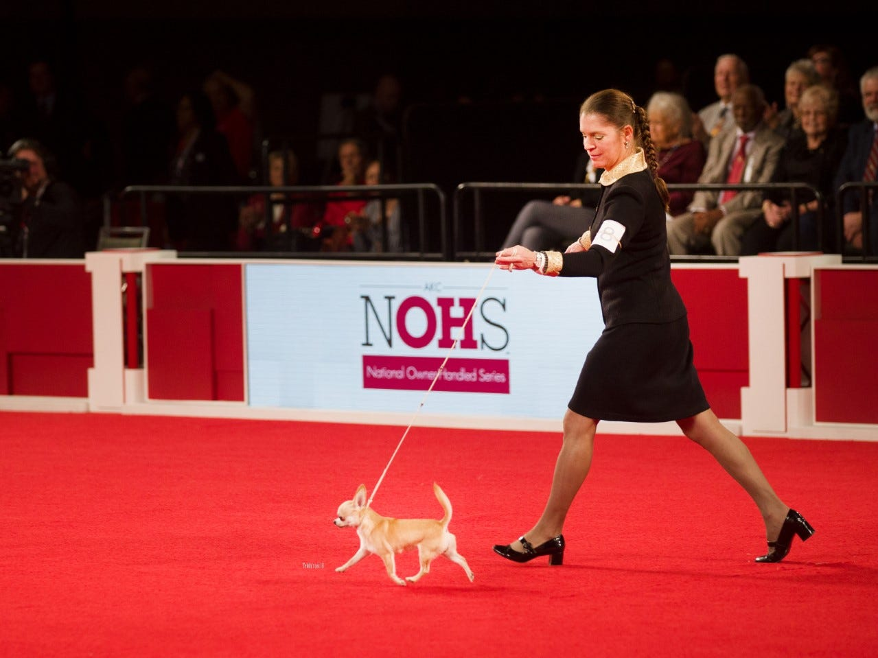Owner-handler Cecilia Bozzo of Wilmington shows her smooth-coat Chihuahua named Tiffany.