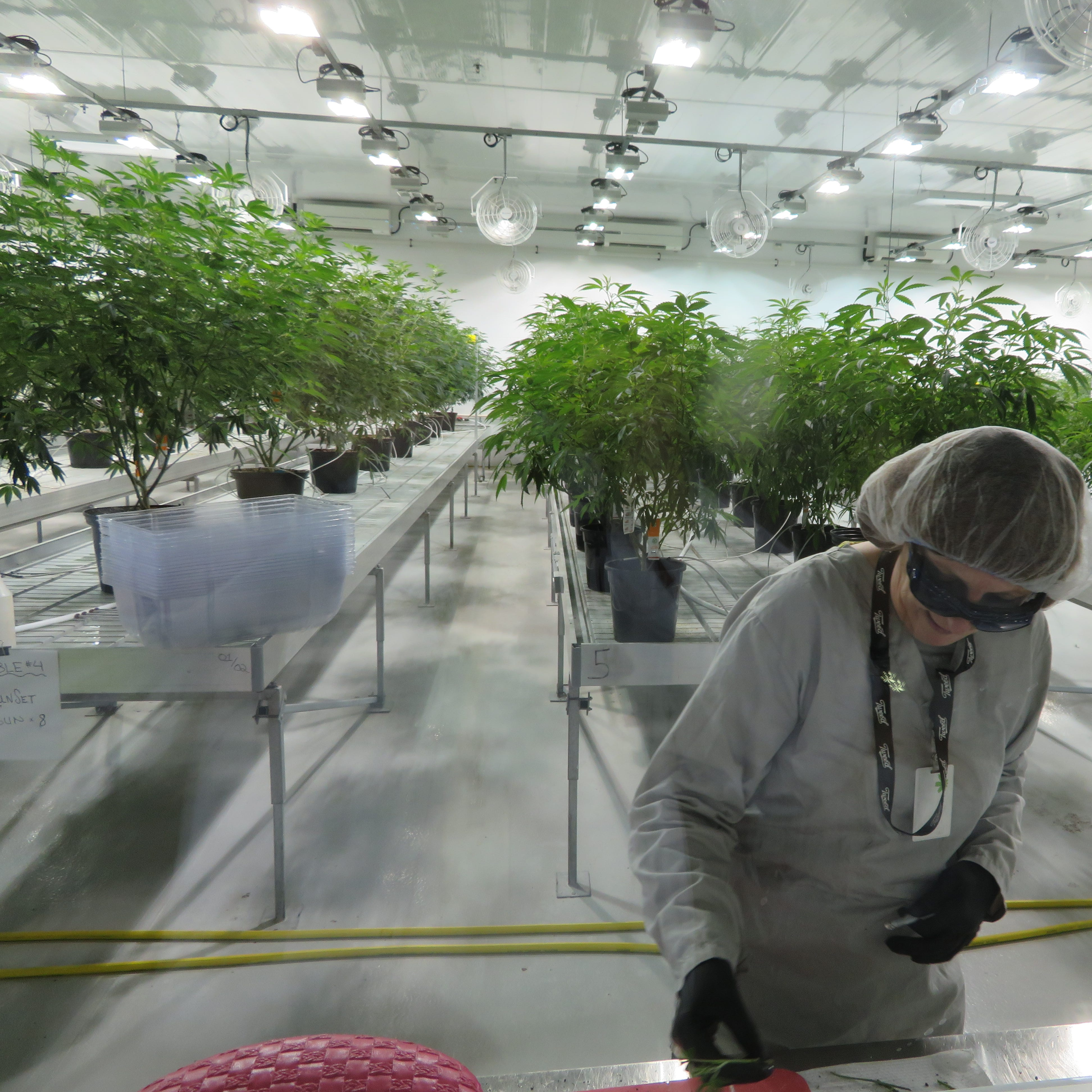 Broome's prospective cannabis player sets the stage for major U.S. operation