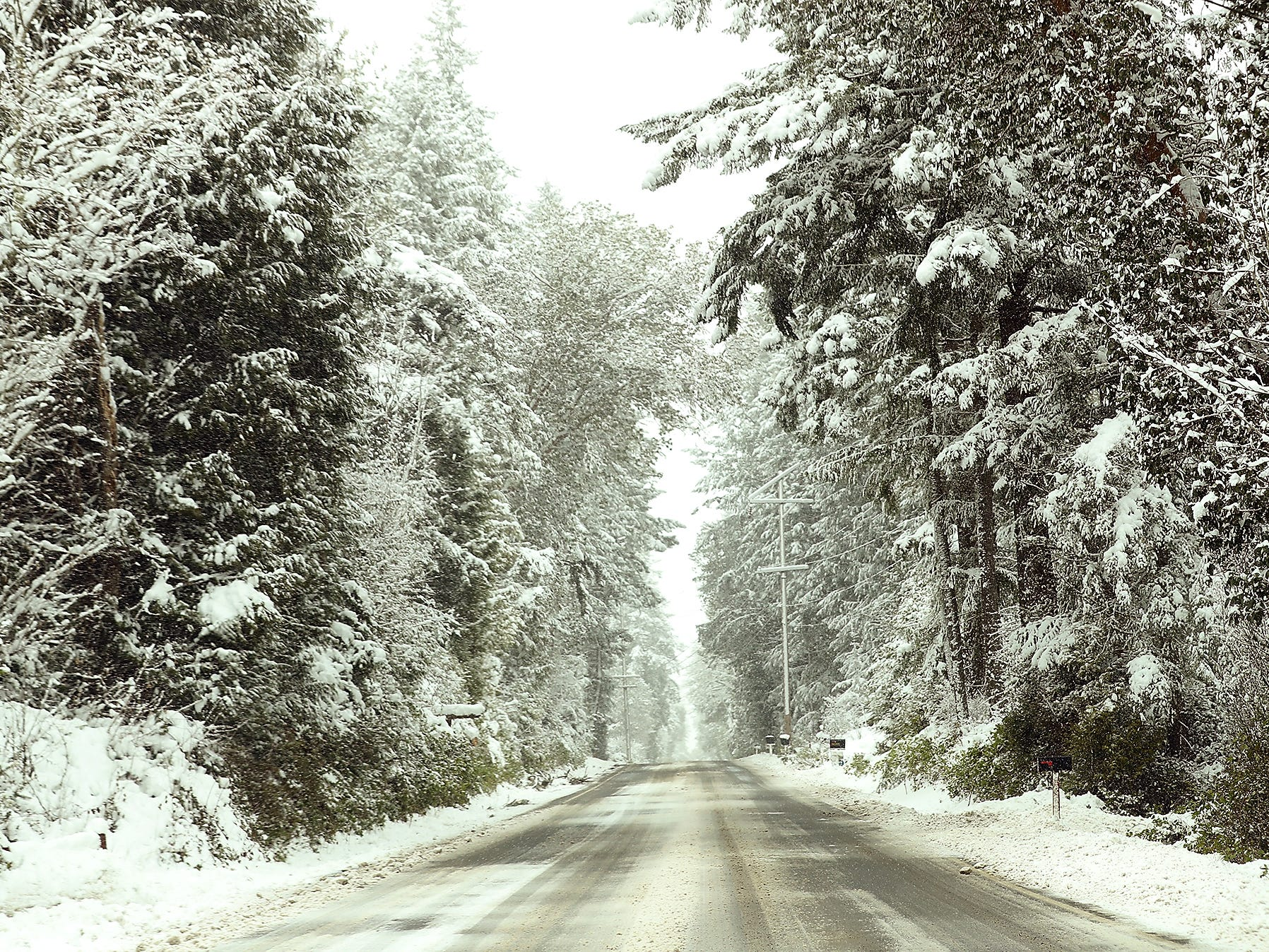 Snow covered trees line Brownsville Highway in Central Kitsap on a snowy Monday, February 11, 2019.