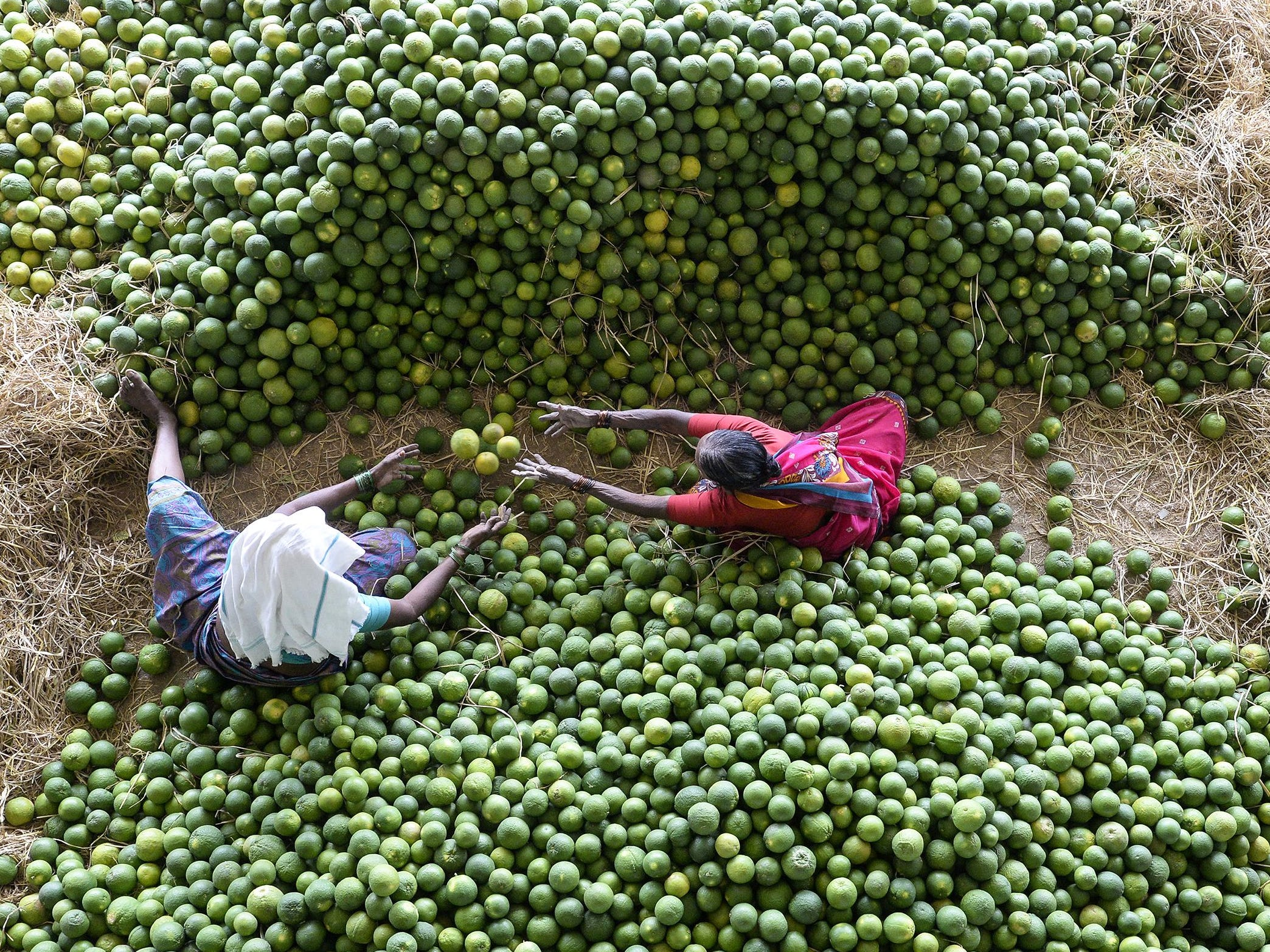 Indian laborers select 'Mosambis' fruits, also called sweet oranges, at Gaddiannaram fruit market on the outskirts of Hyderabad on Feb. 11, 2019.