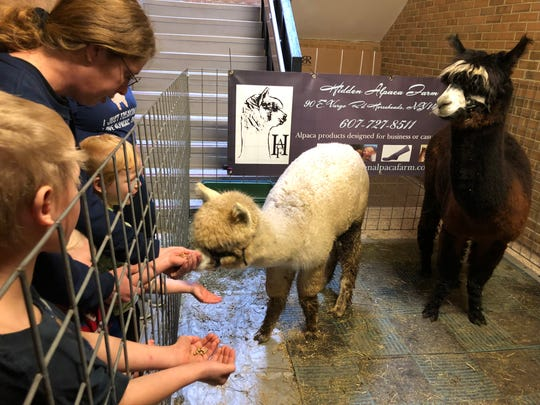 The recent SVE Sportsman Show was a huge success, with literally thousands of people streaming through the high school. Kids were petting puppies, bunnies, goats and reptiles, but two favorites were from Hidden Alpaca Farm.