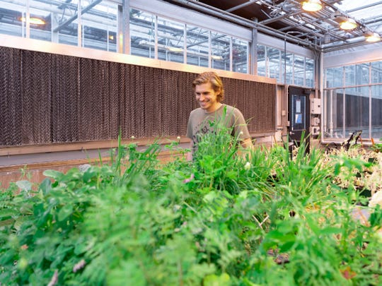 Nicholas Ballew, a research assistant at UT's Plant Sciences, shows some of the plants and grasses being grown at the UTIA greenhouses on on Monday, February 11, 2019.