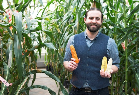 Evan Rocheford, chief executive officer of NutraMaize LLC, holds up orange corn along with ears of yellow and white corn. The orange corn was developed by his father, Torbert Rocheford, the Patterson Endowed Chair in Translational Genomics for Crop Improvement in the Purdue College of Agriculture's department of agronomy through a process known as biofortification to naturally increase the amount of provitamin A carotenoids in corn.