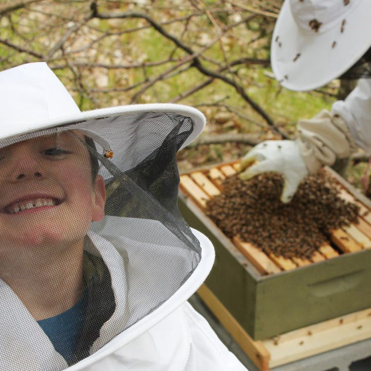 Bee stings, sticky hands: Brighton family bonds over beekeeping