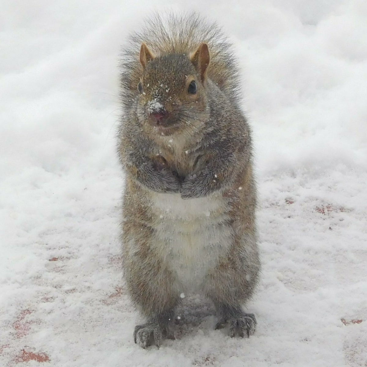 Family squirrel hunt? Not so fast, say animal activists