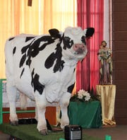 Carly the Cow, a part of the PETA TeachKind program visited ST. Frances Cabrini School Monday, FEb. 11.