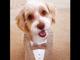 Bernie, a 9-year-old cocker spaniel-poodle mix, is Lilly Smartelli's best friend.