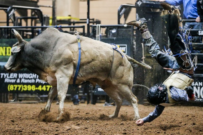 Chris Bechthold is thrown off a bull during the San Angelo Stock Show & Rodeo matinee show Sunday, Feb. 10, 2019, at Foster Communications Coliseum.