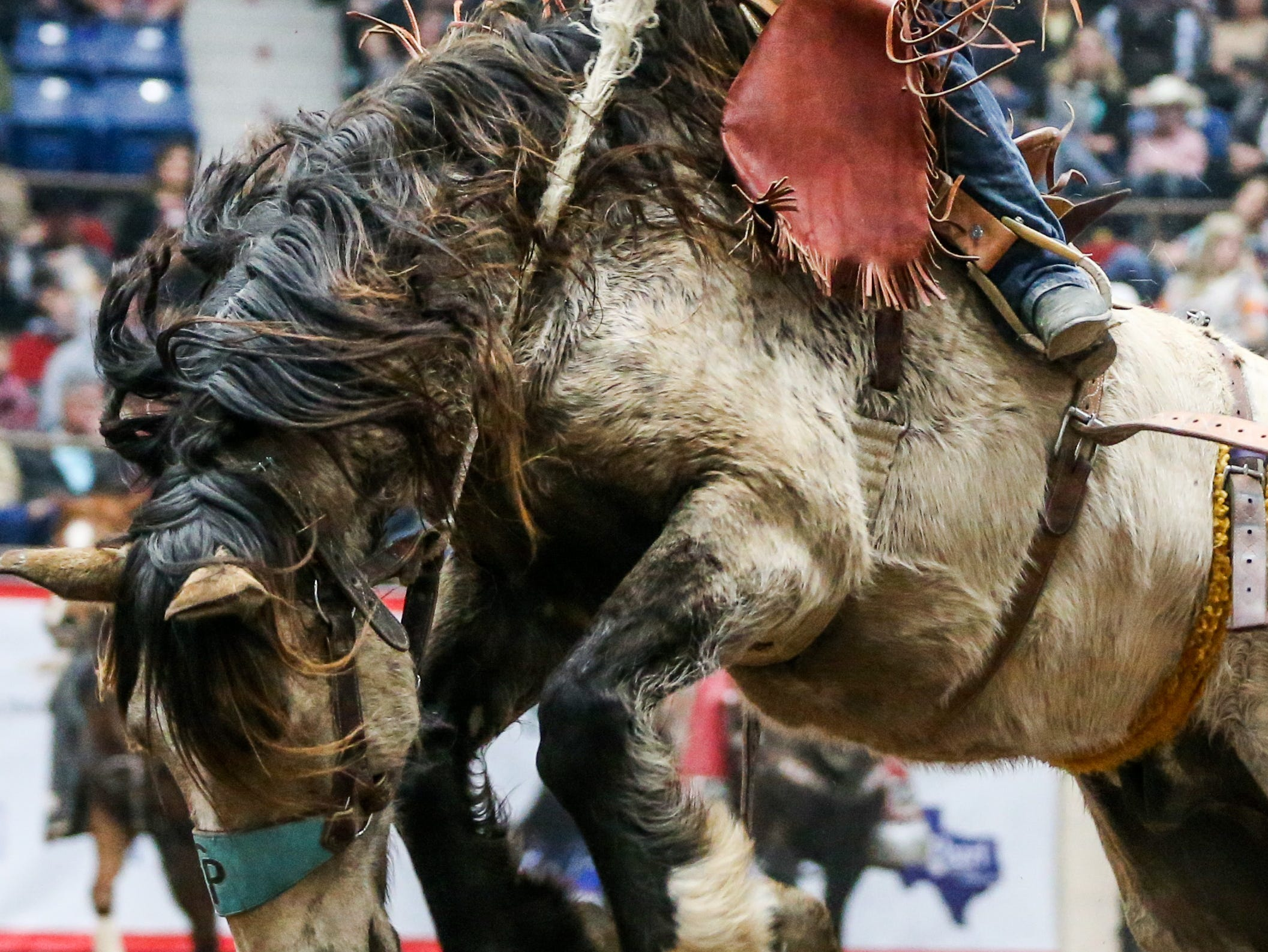Chanse Darling rides a bronc during the San Angelo Stock Show & Rodeo matinee show Sunday, Feb. 10, 2019, at Foster Communications Coliseum.