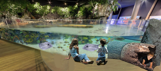 A rendering of the one of the features of the planned expansion by the Butterfly House and Aquarium in Sioux Falls. The Lagoonal Reef will aim to replicate a beach habitat, with stingrays, mangroves and coral.